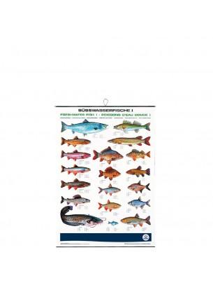 FIAP profifan Freshwater Fish I - Сладководни риби - 99.0 х 70.0 х 1 см.