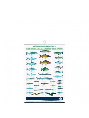 FIAP profifan Freshwater Fish II - Сладководни риби - 99.0 х 70.0 х 1 см.