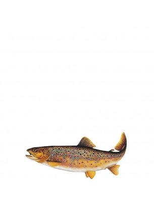 FIAP profifan Sticker Brown Trout - Стикер с високо качество на Балканска пъстърва - 23.5 х 11 см.