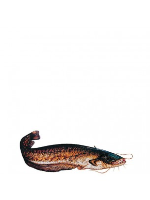 FIAP profifan Sticker Catfish - Стикер с високо качество на Европейски сом - 23.5 х 8.5 см.