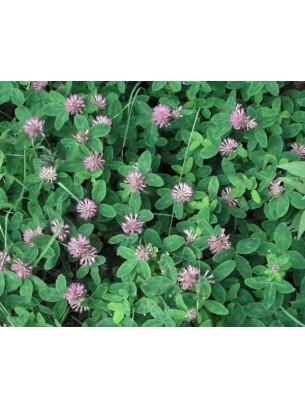 Тревна смеска - Червена детелина  - тревна смес  за градини, паркове и пасища  - 0.1 kg