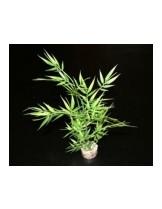 Sydeco Bamboo - изкуствени аквариумни растения - 25 см. 3502733501276