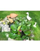 "Доставка и изграждане на Езерце - ""Водна градина"""