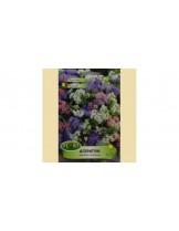 Агератум  микс/ Ageratum mexicanum mix - (едногодишни цветя)