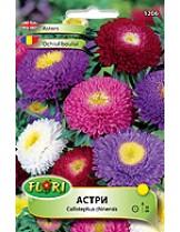 Астри Помпон микс/ Callistephus chinensis Pompon flowered mix - (едногодишни цветя)