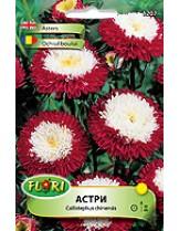 Астри Помпон червено с бяло/ Callistephus chinensis - (едногодишни цветя)