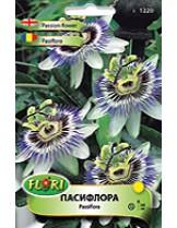 Пасифлора/ Pasiflora - (многогодишни цветя)