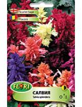 Салвия (Пламък) микс/ Salvia splendens mix - (едногодишни цветя)