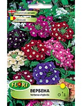 Вербена микс/ Verbena nana mix - (едногодишни цветя)