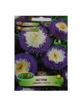 Астри Помпон  синьо с бяло/ Callisterhys chinensis - (едногодишни цветя)