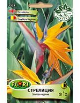 Стрелиция/ Strelizia reginae - (многогодишни цветя)