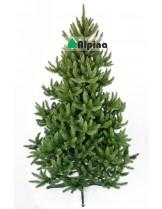 Коледна елха Alpina Див Смърч - 180 см.
