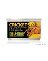 Exo Terra - Crickets XL - консервирани щурци / големи /  за влечуги и земноводни - 34 гр.