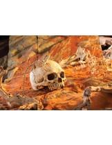 Exo Terra - Primate Skull - декор за терариум череп на маймуна