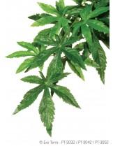 Exo Terra - Abuliton Medium - висящо терариумно растение