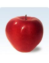 Ябълка - Глостер -  височина -1.00 - 1.10 м.