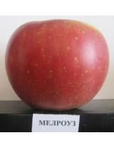 Ябълка - Мерлоуз - височина - 1.00 - 1.10 м.