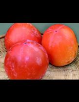 Райска ябълка Каки Типо-Kaki Tipo - 1.20 - 1.80 м.