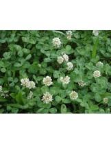 Тревна смеска -Бяла детелина  - тревна смес  за градини, паркове и пасища  - 0.5 kg