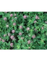 Тревна смеска - Червена детелина  - тревна смес  за градини, паркове и пасища  - 0.5 kg