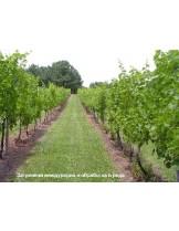 Тревна смеска -подходяща за мулчиране за лозя и овощни градини- 1  kg