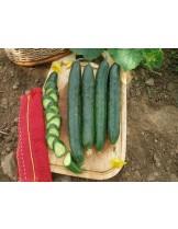 """Краставици - сорт """"Гергана"""" - 2 гр. - около 35 семена в 1 гр."""