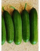 """Краставици - сорт """"Бета Алфа F1"""" - (средноплодни) - 1 гр. - около 35 семена в 1 гр."""