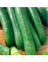 """Краставици - сорт """"Теса F1"""" - (средноплодни) - 1.5 гр. - около 35 семена в 1 гр."""