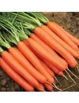 """Моркови - сорт """"Нантски"""" - 5 гр."""