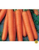 """Моркови - сорт """"Тушон"""" - 5 гр."""
