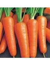 """Моркови - сорт """"Роял Шантене"""" - 5 гр."""