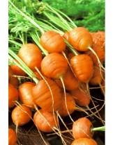 """Моркови - сорт """"кръгли"""" - 3 гр."""