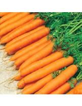 """Моркови - сорт """"Амстердам 2"""" - 5 гр."""