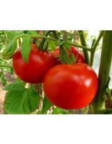 Домати - от серия Възродени Български Сортове -  ОПАЛ БГ F1 - 0.2 гр. -около 70-80 бр. Семена