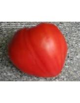 """Продавам разсад Домати - сорт """"Биволско сърце - червено"""" - вкоренен в контейнер."""